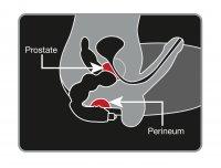 Preview: Prostata MassageBig Boy - wirkungsvoller Prostata-Vibrator